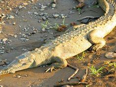 Dudhwa National Park - in Uttar Pradesh, India