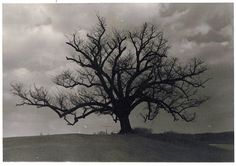 The Hanging Tree, at the tip of the Twin Glades. The first vestige of evil.
