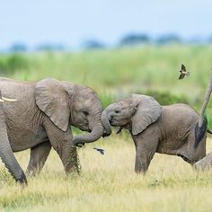 Here's a trunk bump to get the new week off to a good start. Happy Monday everyone! #cute #rememberingelephants #naturephotography