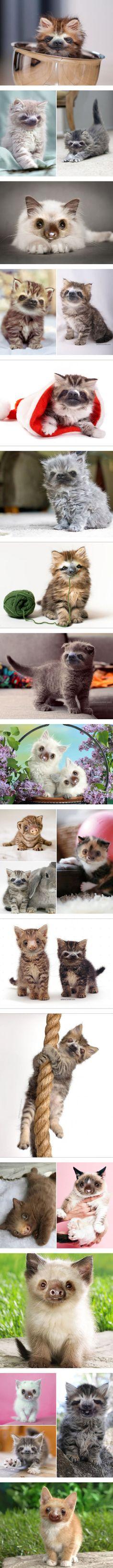 Sloths + Kittens = Slittens