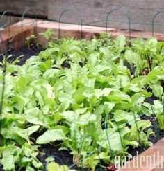 Turning Lawn into a Vegetable Garden with Raised Beds
