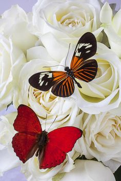 roses and butterflies - Buscar con Google