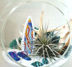 Hanging Air Plant Terrarium Surf's Up Large Air by LaurasLites