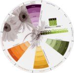 Scrapbook Color Wheel for Scrapbook Layout Design