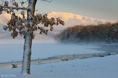 Whooper swans and winter scene; Lake Kussharo, Hokkaido, Japan.