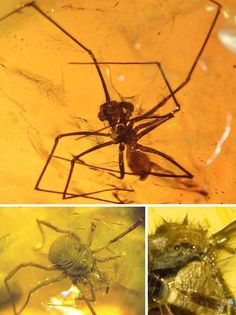 Windows On The Past: 7 Amazing Creatures Preserved In Amber