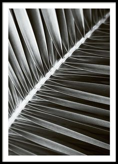 Stylish botanical poster with a palm leaf print in black and white. Looks great as part of a picture collage matched with some of our other botanical prints or any of our black and white text posters. Just as perfect hanging on a wall as it is standing on a shelf. www.desenio.co.uk
