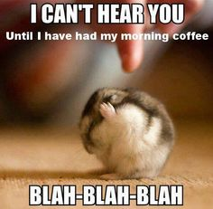 Funny Quotes: Top 30 Funny Animal Pictures and Jokes images . - BildersPin : Funny Quotes: Top 30 Funny Animal Pictures and Jokes images . Animal Captions, Funny Animal Jokes, Cute Funny Animals, Funny Animal Sayings, Clean Animal Memes, Funny Animals Talking, Funny Animals With Captions, Animal Funnies, Cute Memes