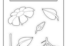 term3 plants seeds parts of a plant jpg w 288 h 200 zc 1 a c