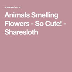 Animals Smelling Flowers - So Cute! - Sharesloth