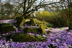The 151 best spring flowers images on pinterest beautiful places spring crocusleicester england photo via existentialist mightylinksfo