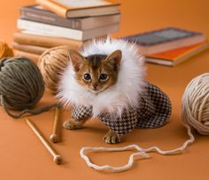 A Study: Hipster Cats In Hipster Outfits | MTV Style    (via A Study: Hipster Cats In Hipster Outfits)    Pay no attention to the cringe-worthy title of the article, it's just pictures of cats in outfits what more do you need :3