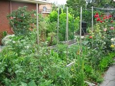 Permaculture demonstration urban garden in Melbourne, Australia. Lots of great info on getting started with permaculture Patio, Backyard, Vegetable Garden, Garden Plants, Culture Bio, Image Clipart, Forest Garden, Urban Farming, Edible Garden