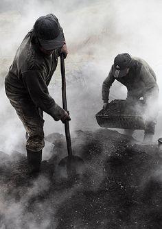 Carbón Vegetal -Puntra-  Chiloe Los Lagos  Chile