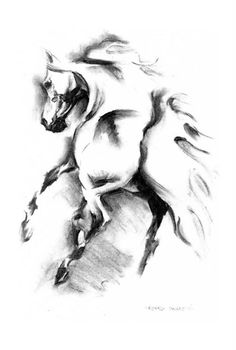 Arabian horse, charcoal drawing, 29 x 42 cm