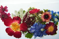 pressed dried flowers & leaves mixed M