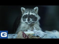 The Scavenging Raccoons From Geico& New TV Ad Are Doing Gross Cooking Demos Online Funny Commercials, Funny Ads, Hilarious, Tv Ads, Creative Advertising, Viral Videos, Funny Videos, Popular Culture