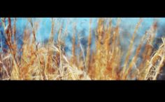 Fieldgrass (Erik Pedersen)