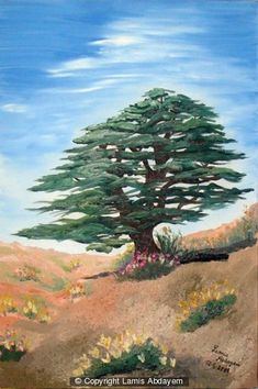 Oil on Canvas 15.7in(w) x 23.6in(h) $280.80 The Cedar tree is the national sign of Lebanon. It grows in the high mountains, and it stands up alone facing strong storms & dryness for years. These are the Lebanese people, they are proud to be Lebanese and where ever they are they can stand alone in front of all the obstacles and always succeed in life.