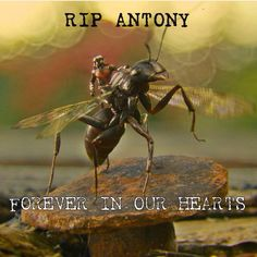 *cries* I NEVER KNEW ANTS COULD BE SO CUTE!!!!! WHY DID HE DIE!??????