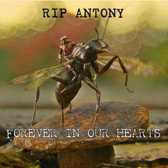 ANTONY!  I shouldn't be so emotional over Antony...