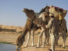 Randonnee Tunisie à dos de dromadaire