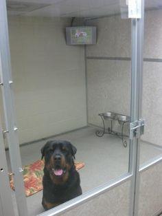 luxury dog enclosures - Google Search