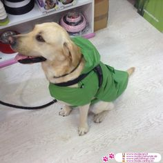 Green Sleeveless Raincoat for Large Dogs #PetClothings - Green waterproof raincoat for large dogs, easy to wear because it is sleeveless (just like a cape); made in PVC, the closures are with velcro