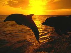 Dolphins at sunset  B-E-A-UTIFUL!