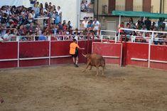 Santacara: Salto de la vaca de Arriazu en Santacara Goats, Animals, Cows, Siblings, Fiestas, Animales, Animaux, Animal, Animais