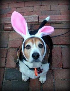 It's the Easter beagle!