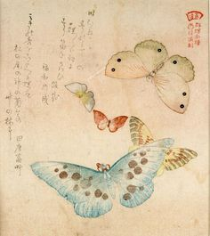 Artist: Kubo Shunman Title:One Large, Two Medium-Sized and Two Small Butterflies with text beginning Tokimune ga..., from the series An Illustrated Collection of Butterflies for the Kasumi Group (Kasumi-ren gunchô gafu), poems by Dento Fuso and associates, Edo period, circa late Bunka Era (1804-1818) Date:Edo period, Late, 1789-1868