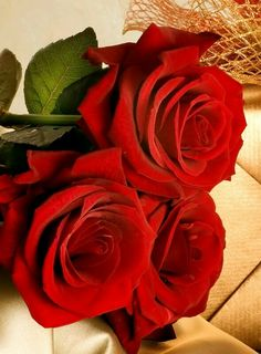 . Outdoor Flowers, Rose Tattoos, Beautiful Roses, Garden Landscaping, Red Color, Red Roses, Red And White, Amazing, Plants