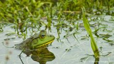 Frog in its own little paradise