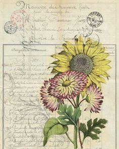 Botanical Print Sun Flower