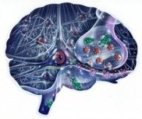 Depression Brain Changes Explored | New discoveries are being made about changes in the brain during depression. Dr. Mia Lindskog of the Karolinska Institute, Sweden, and her team say that two separate mechanisms cause the emotional symptoms and the deficits in memory and learning seen in depression.