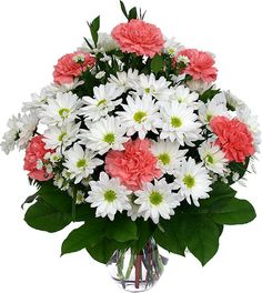 ffordable and long lasting combination of six pink carnations with white daisies and asters. A bright, cheerful gift that will surely help raise their spirits.