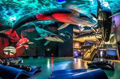Im Ozeaneum in Stralsund tauchen Besucher in die Unterwasserwelt von Ostsee, Nordsee und Atlantik ein. Wir zeigen Fotos vom Aquarium. Aquarium, Merian, Science Museum, Daydream, Playground, Opera House, Places To Go, Building, Travel