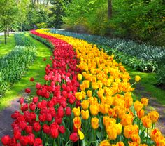 Passengers aboard Panache will tour the world famous Keukenhof Gardens, home to seven million tulips, daffodils and other colorful flowers in full bloom.
