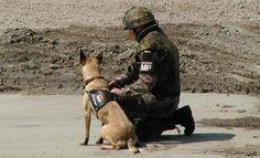 Diensthunde (Bw)