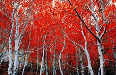 13 Stunning Pictures Celebrating The Beautiful Colors Of Fall | Bored Panda