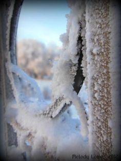 trellis window view