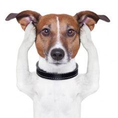 jack russelel honden afbeeldingen | Explore Plastic Surgery – Dr. Barry Eppleyscar revision Archives ...