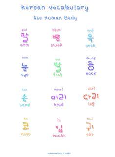 ❋learn korean - human body❋