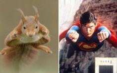 OMG Super Squirrel !!!