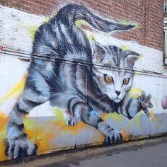cat by SMOK
