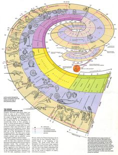 All sizes | Origin & Development of Life Visual - Encyclopaedia Universalis | Flickr - Photo Sharing!