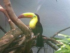 Pittsburgh Aviary