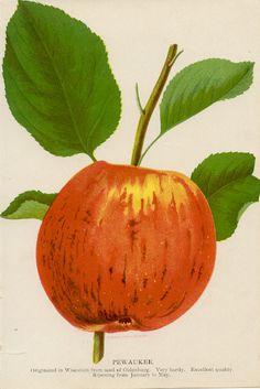 The Pewaukee Apple Work Inspiration, Watermelon, Art Gallery, Fruit, History, College Campus, Apples, Nursery, American