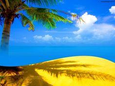 Palm Tree Beach PPT Backgrounds Slide Background, Beach Background, Background Images, Powerpoint Presentation Slides, Summer Slide, Beach Wallpaper, Free Beach, Free Summer, Beach Photos